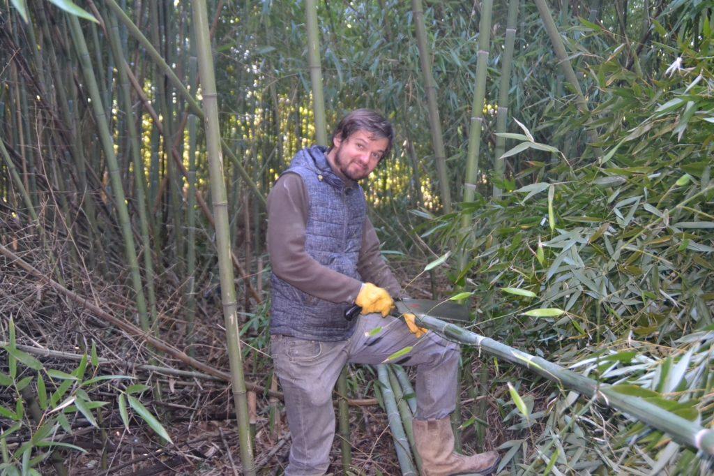 Découpe de bambous en France pour l'atelier Bambou Créations
