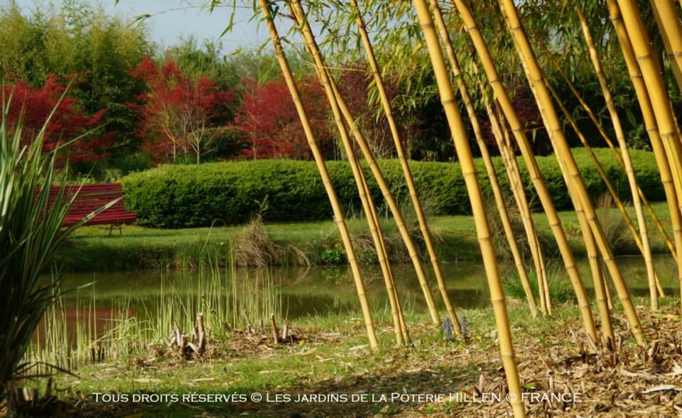 Formation quel bambou pour quel jardin - jardin remarquable de la poterie Hillen - Bambou Créations