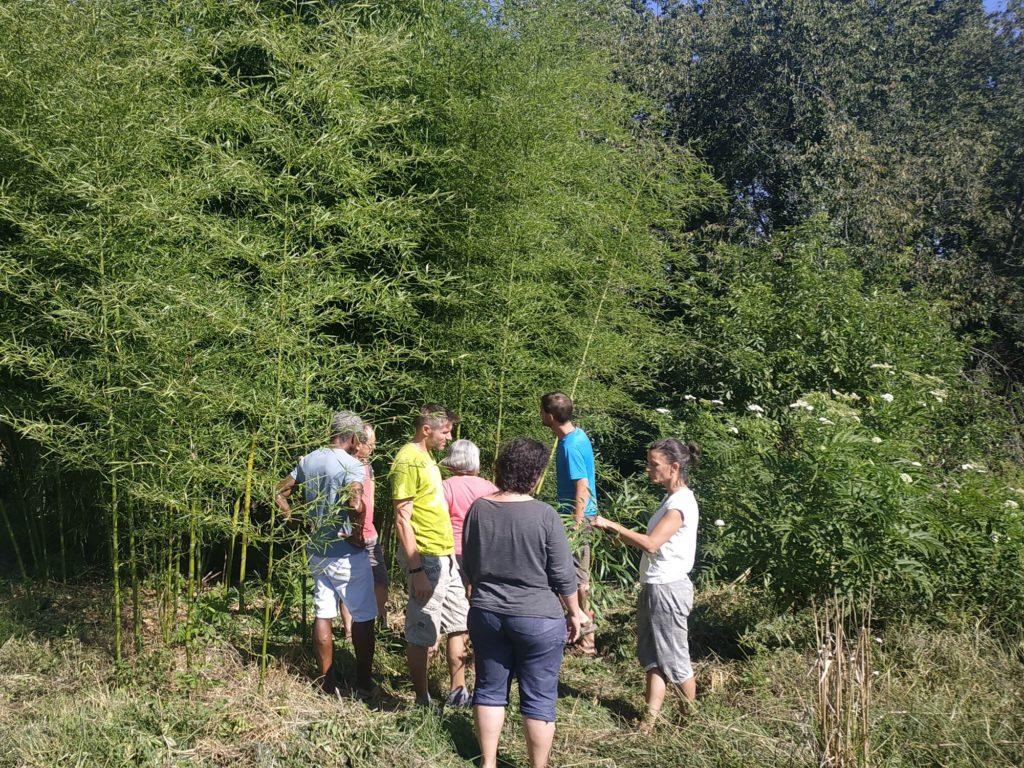 Visite d'une bambousaie - formation bambou créations