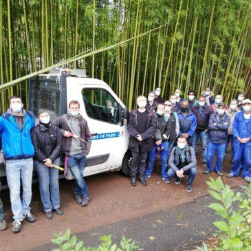 Formation Bambou pour la Mairie de Paris